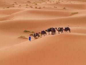 People on camels crossing the Sahara Desert