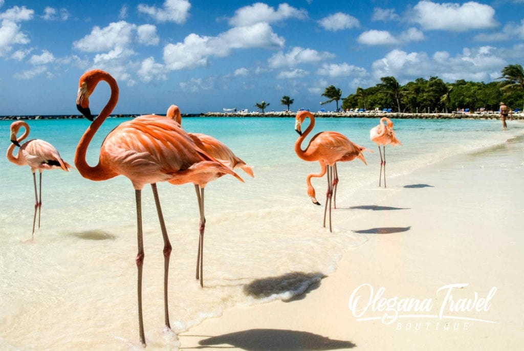 Beatiful Flamingo beach