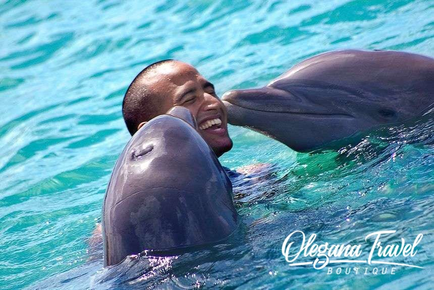 Who doesn't love dolphins?