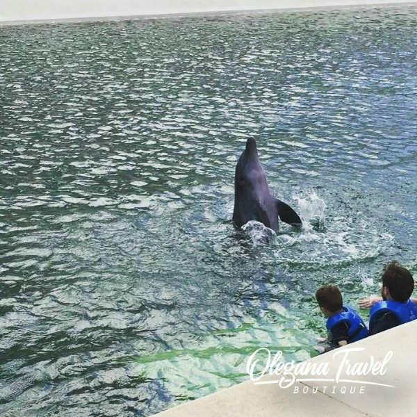 Hyatt Ziva Cancun Dolphinarium