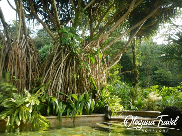 Natural Hot Springs at Tabacon Resort in Costa Rica