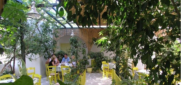 A meal beneath the lemon & olive trees